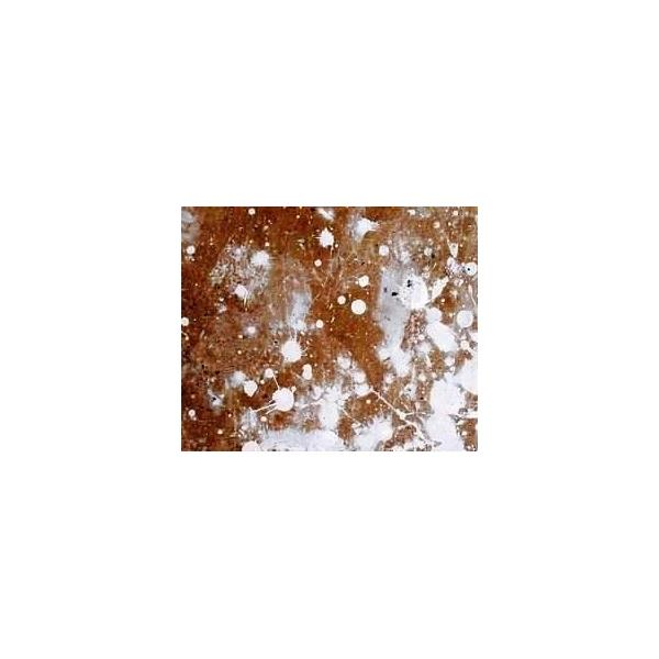 Solutie curatat Vopsea lavabila - DRAP V